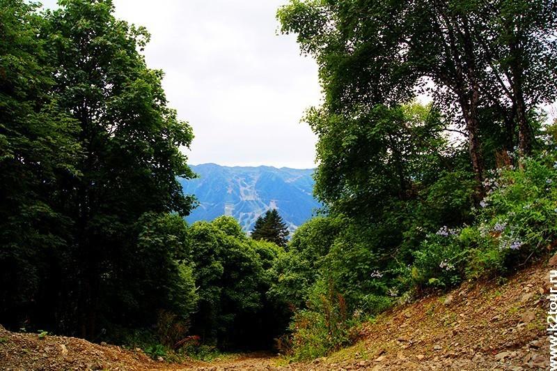 дорога по лесу вверх
