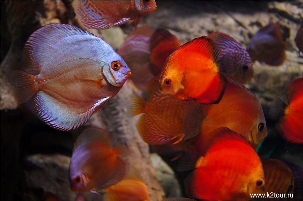 океанариум в адлере рыбки