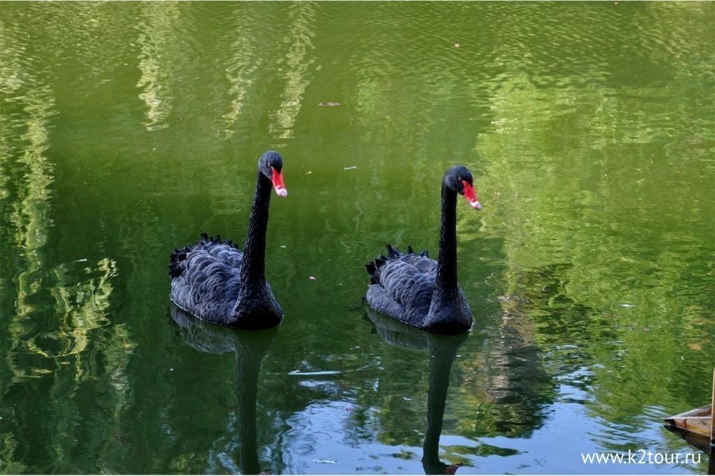 Park Uzhnie Kultyri Adler 70