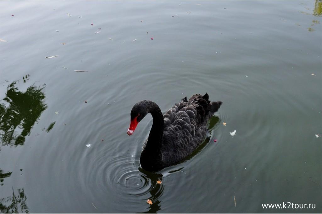 Park Uzhnie Kultyri Adler 72